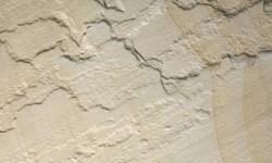 Buff Fossils Sandstone